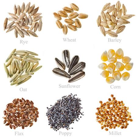 コレクションの穀物と種子ライ麦小麦、大麦、オート麦、ひまわり、トウモロコシ、亜麻、白で隔離されるケシの実、キビのクローズ アップ