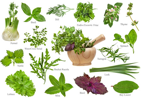 Fresh herbs collection set close up isolated on white background photo