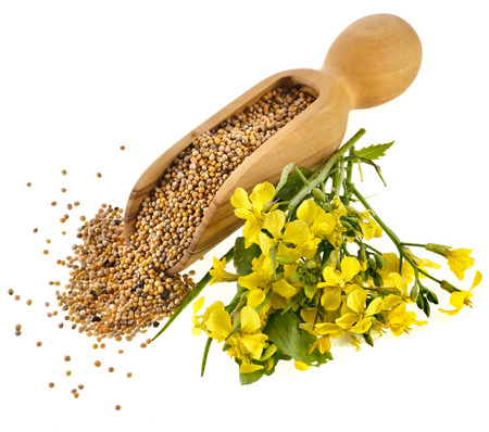 Mustard seeds in the wooden scoop with mustard flower bloom on white