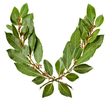 bay: Laurel wreath isolated on white background