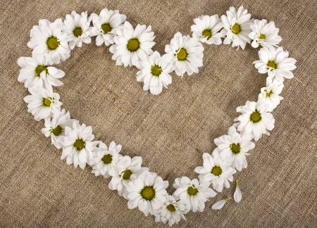 Flowers daisy shape heart on a canvas background , valentines day card concept Stock Photo