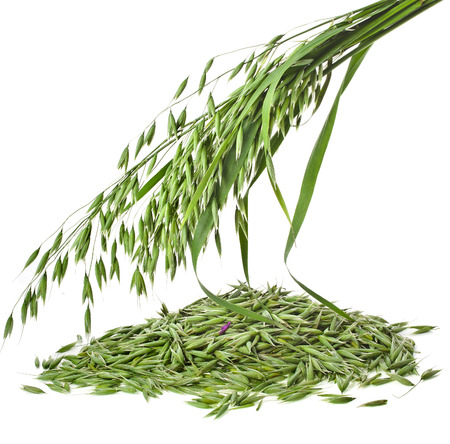 green oat seeds pile close up isolated on white background photo