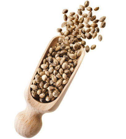 hemp: Cannabis Hemp seeds in wooden scoop isolated on white background