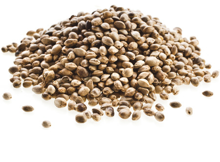 hemp hemp seed: Cannabis Hemp seeds close up macro shot isolated on white