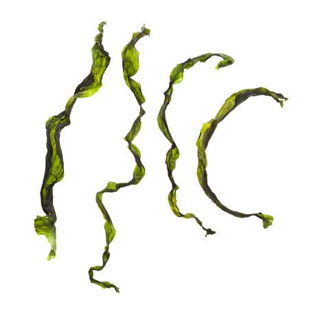 alga: Collection set of dried seaweed kelp set close up Isolated on white background