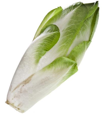 endivia: jefe de la achicoria endibia fresca aislado en un fondo blanco Foto de archivo