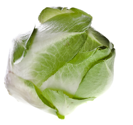 chicory: head of belgian endive chicory isolated on a white background Stock Photo