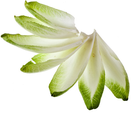 chicory: endive chicory leaves isolated on a white background