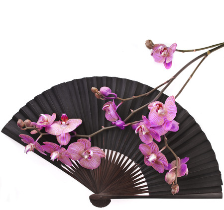 japanese paper: Beauty Black Japanese Paper Fan Surface with Fresh Flower Orchid Isolated on white background