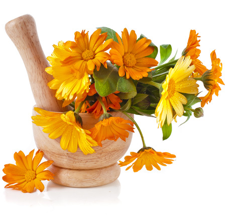 calendula: herbal flower of calendula Officinalis in wooden mortar Isolated on white background