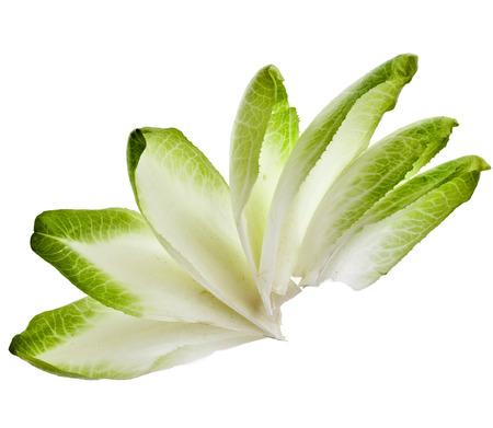endivia: Achicoria escarola hojas aisladas sobre un fondo blanco