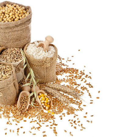커널: 옥수수 커널 씨앗 식사 및 흰색 배경에 격리 된 가방에 곡물의 테두리 프레임
