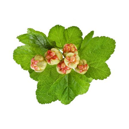 chicouté: frais chicouté chamaemorus Rubus isolé sur blanc Banque d'images