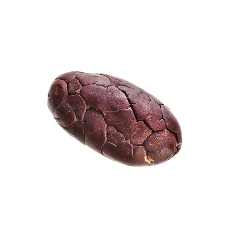 one single cocoa bean close up macro shot isolated on white background photo