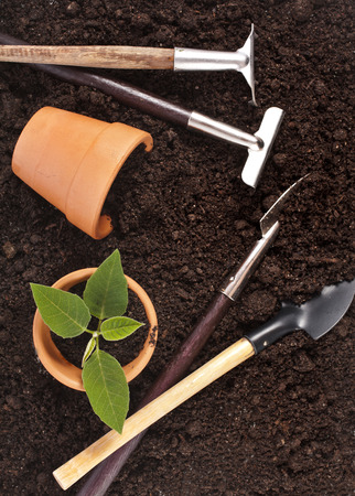 turba: herramientas de jardinería y plántulas en el fondo de la superficie del suelo Foto de archivo