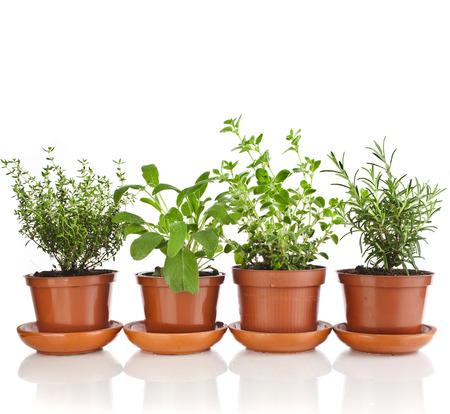 Collection d'herbes aromatiques en pot de fleurs brun isolé sur fond blanc Banque d'images