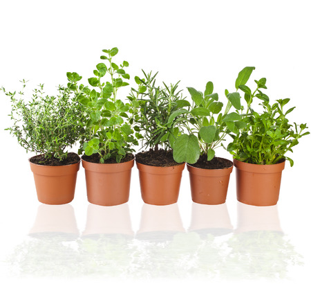 Collection of fresh flavoring herbs in brown flower- pot isolated on white background photo