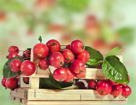 rennet: Crab Apple fruits heap in wooden box crate Stock Photo