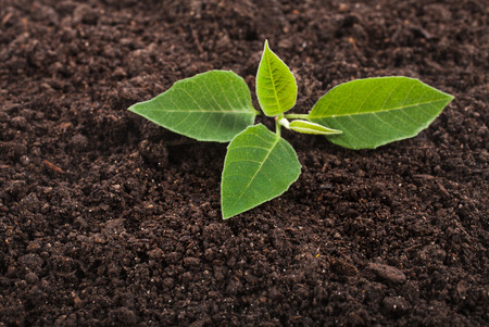 manure: Seedling green plant surface top view textured background