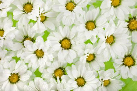 daisy flower: Daisy flower top view close up texture