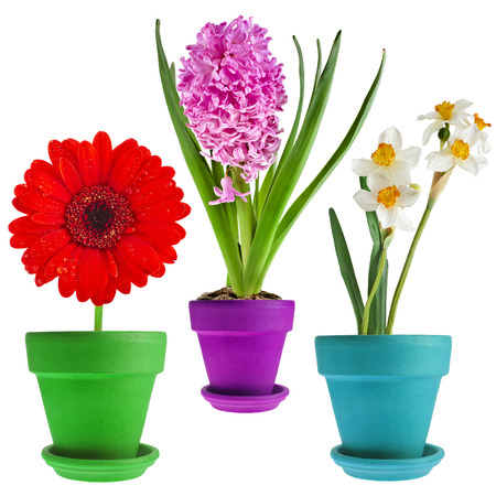 red clay: Collection set of spring flower bouquet potted Isolated on White Background