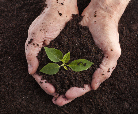 land plant: Hands holding sapling in soil surface Stock Photo