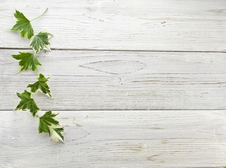 Groene klimop planten Hedera helix van dichtbij in houten oppervlak achtergrond met een kopie ruimte Stockfoto - 29414927