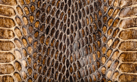 snake skin: Snake skin texture closeup for background and wallpaper Stock Photo
