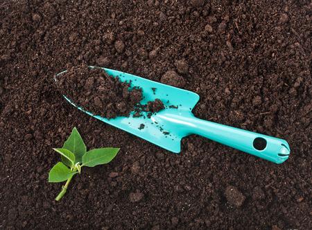 suelo arenoso: Planta de semillero de la superficie de la planta verde vista superior de textura cerca de fondo