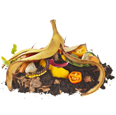 compost pile of kitchen scraps isolated on white background photo