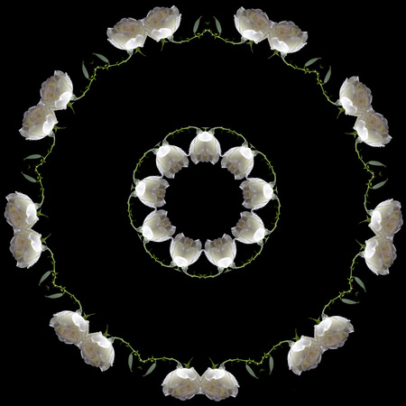 rose frame: Border Frame Floral Abstract Pattern of beautiful white rose isolated on black background