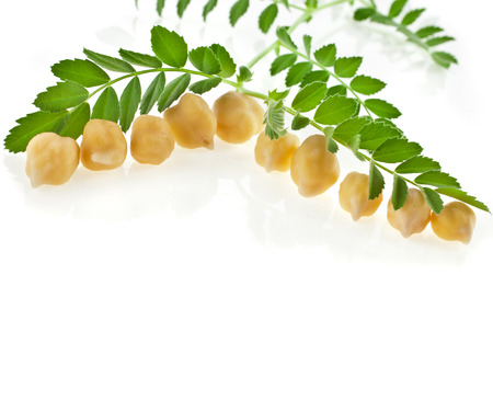 chickpea: Chickpea plant with seed isolated on white background