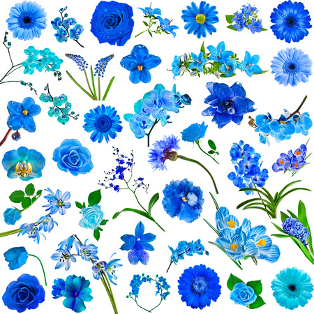 blue green background: Collection set of blue flowers isolated on white background