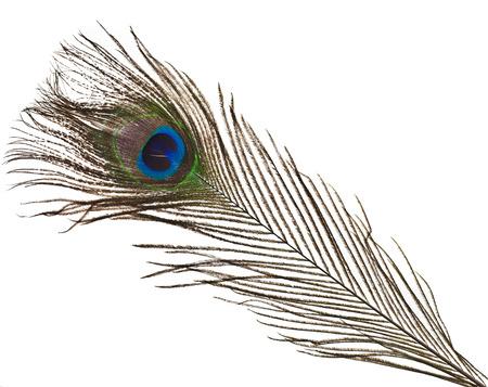 pluma de pavo real: penacho de plumas de pavo real aislados en blanco close-up Foto de archivo