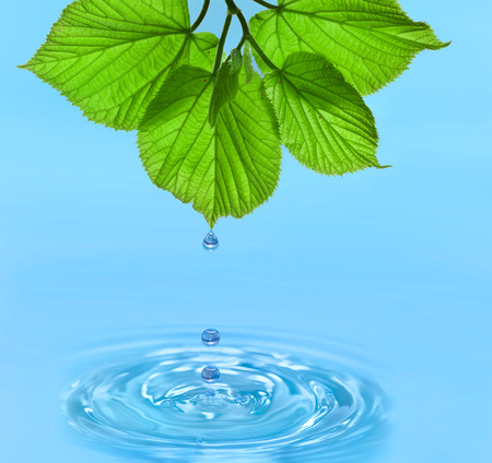 pour water: Water drop from green leaves on summer background Stock Photo