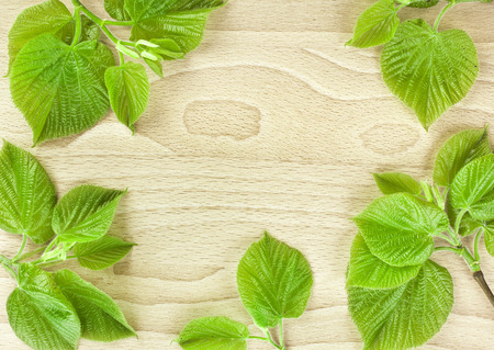 Spring Green Leaves close up in wooden surface background with copy space photo