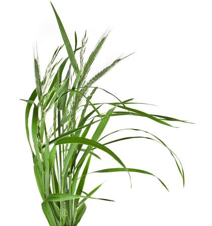 Stelletje groen gras geïsoleerd op een witte achtergrond Stockfoto - 30058688