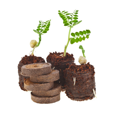 Growing seedlings in peat compressed tablet isolated on white background photo