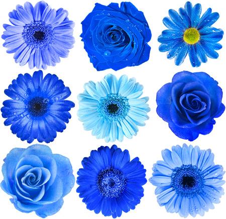 Diverse Blauwe Bloemen hoofd bovenaanzicht close up Selectie geïsoleerd op witte achtergrond Stockfoto