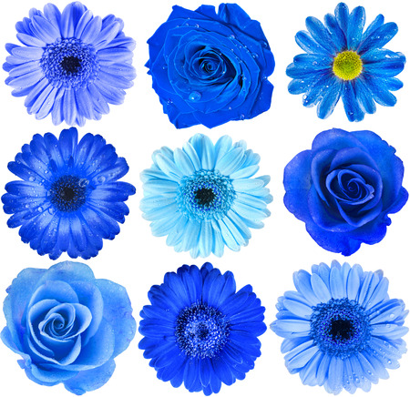 Various Blue Flowers Head top view close up Selection Isolated on White Background