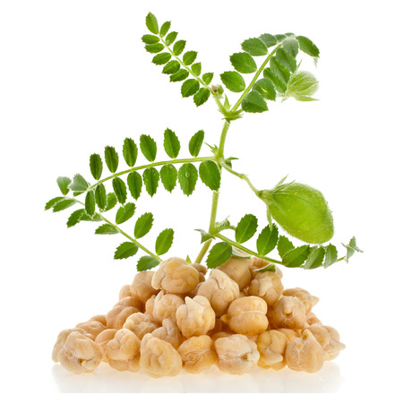 plant seed: chickpeas plant with seed heap close up,isolated on white background Stock Photo