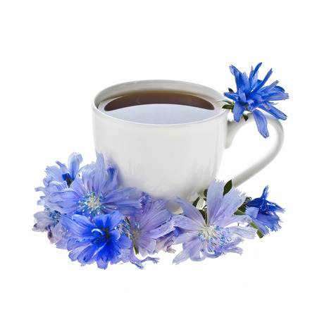 chicory: Diet drink chicory in a cup - Coffee substitutes with Cichorium intybus flower
