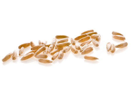 Young Grains of Wheat ears close up isolated on a White Background photo
