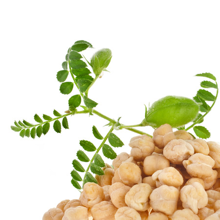 chickpeas plant with seed heap close up,isolated on white background photo