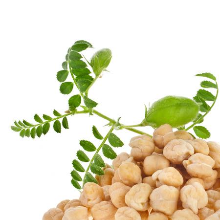 garbanzos: garbanzos planta con semilla montón de cerca, aislado en fondo blanco