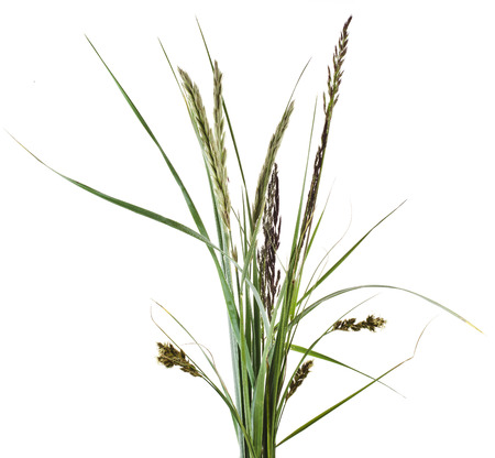 bunch of mix green grass Isolated on white background