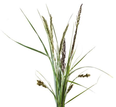 Stelletje mix groen gras geïsoleerd op een witte achtergrond Stockfoto - 30483822