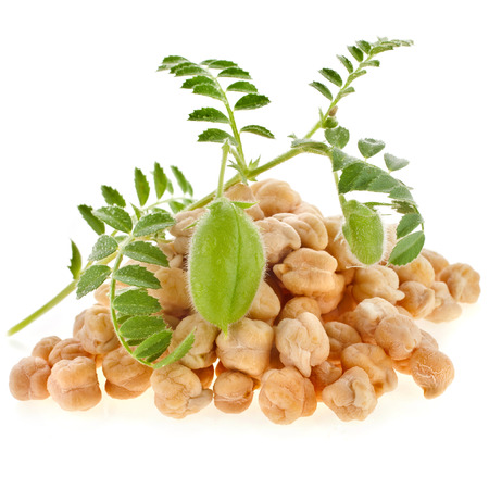 chickpeas plant with seed heap close up,isolated on white background Stockfoto