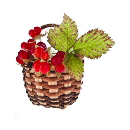 dysentery: Wild Forestry Stone Bramble berry (Rubus saxatilis) in wicker basket close up isolated on white background