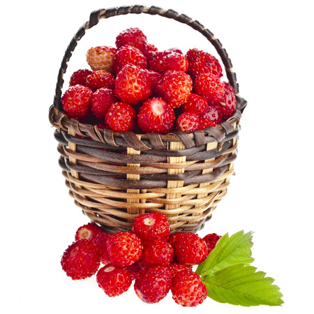Wild Strawberries in wicker basket close up isolated over white background photo